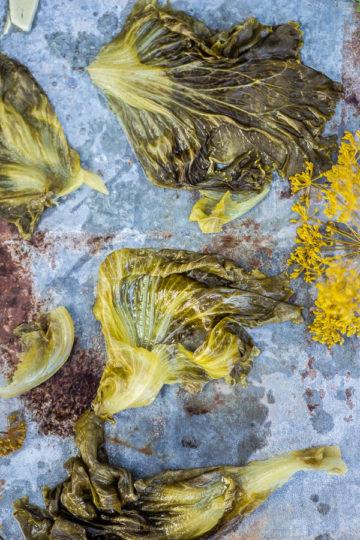 kiszona sałata